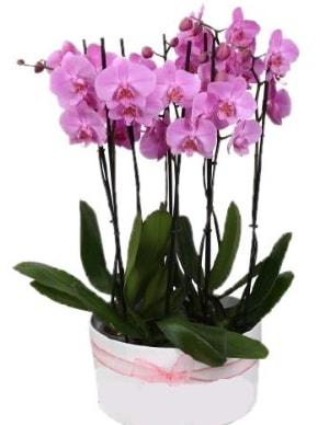 Beyaz seramik içerisinde 7 dallı mor orkide  Erzurum cicekciler , cicek siparisi
