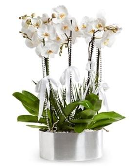 Beş dallı metal saksıda beyaz orkide  Erzurum online çiçek gönderme sipariş