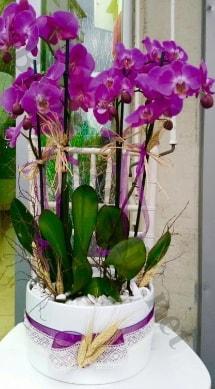 Seramik vazoda 4 dallı mor lila orkide  Erzurum online çiçekçi , çiçek siparişi