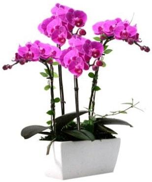 Seramik vazo içerisinde 4 dallı mor orkide  Erzurum uluslararası çiçek gönderme