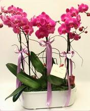Beyaz seramik içerisinde 4 dallı orkide  Erzurum anneler günü çiçek yolla