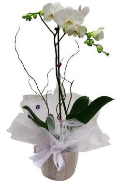 Tek dallı beyaz orkide  Erzurum çiçek yolla , çiçek gönder , çiçekçi