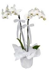 2 dallı beyaz orkide  Erzurum çiçekçi mağazası