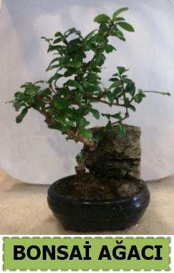 Bonsai ağacı japon ağacı satışı  Erzurum hediye sevgilime hediye çiçek