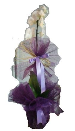 Tek dallı beyaz orkide süper kalite ithal  Erzurum çiçek servisi , çiçekçi adresleri