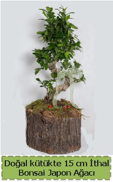 Doğal kütükte İthal bonsai japon ağacı  Erzurum cicek , cicekci