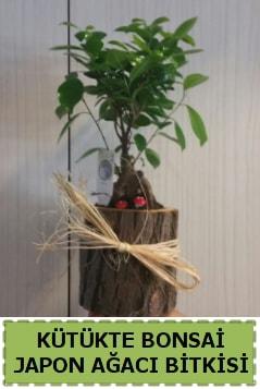 Kütük içerisinde doğal bonsai ağacı  Erzurum cicekciler , cicek siparisi