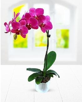 Tek dallı mor orkide  Erzurum uluslararası çiçek gönderme
