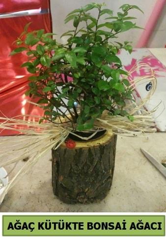 Doğal ağaç kütük içerisinde bonsai ağacı  Erzurum çiçek siparişi vermek