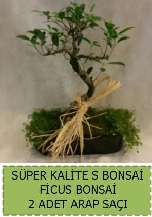 Ficus S Bonsai ve arap saçı  Erzurum cicekciler , cicek siparisi