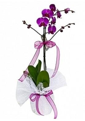 Tekli Mor Orkide  Erzurum online çiçek gönderme sipariş