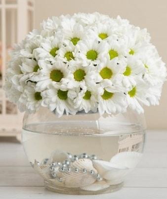 Fanusta beyaz Papatya  Erzurum uluslararası çiçek gönderme