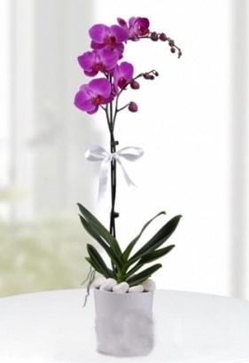 Tek dallı saksıda mor orkide çiçeği  Erzurum kaliteli taze ve ucuz çiçekler