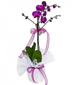 Tek dallı saksıda ithal mor orkide çiçeği  Erzurum kaliteli taze ve ucuz çiçekler