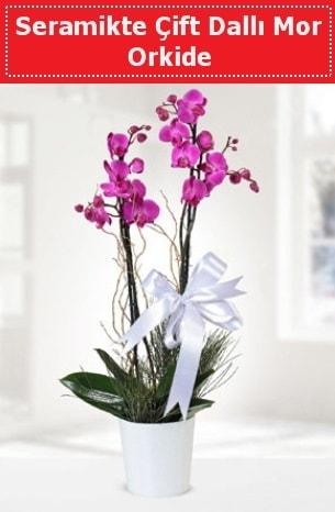 Seramikte Çift Dallı Mor Orkide  Erzurum çiçek gönderme