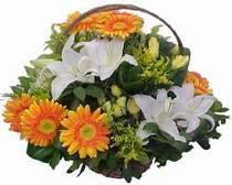Erzurum internetten çiçek satışı  sepet modeli Gerbera kazablanka sepet