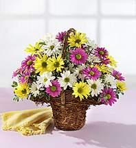 Erzurum kaliteli taze ve ucuz çiçekler  Mevsim çiçekleri sepeti